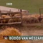 Bűzre panaszkodnak Mészáros Lőrinc szomszédai