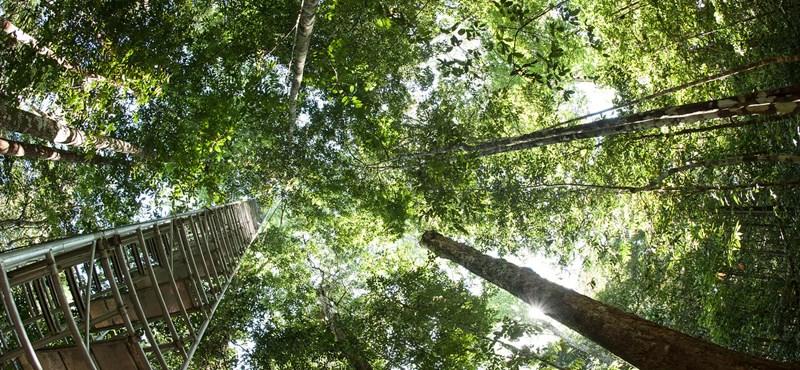 Óriási területet zöldít ki Kína és India, de ez is kevés lehet a klímaváltozás ellen