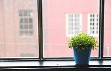 Hatalmas csalódás, ami 30 év után most kiderült a szobanövényekről