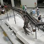 Kimosták a világ leghíresebb dinoszauruszának orrát