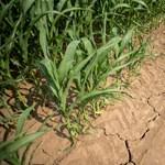 Válság az agrárszektorban: az elmúlt 40 évben még soha nem volt ilyen nagy a szárazság, mint most