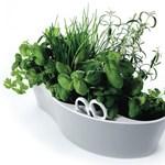 Így neveljen otthon fűszernövényeket