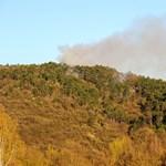 Kigyulladt az erdő Budaörsön