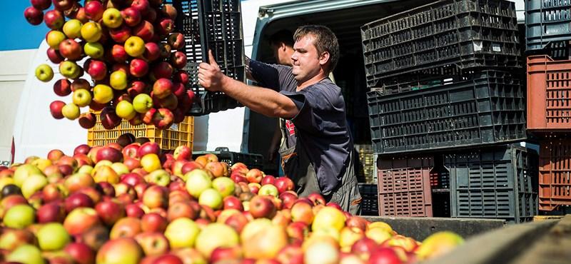 Raskó György keményen beszólt a tiltakozó almatermesztőknek