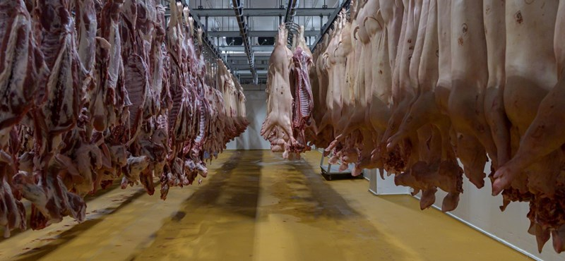 Két járvány is ráncigálja a sertés árát, de olcsóbb aligha lesz a boltokban