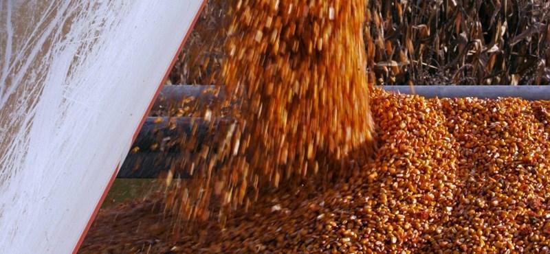 Az LMP mindenhogy tiltaná a génmódosított élelmiszereket