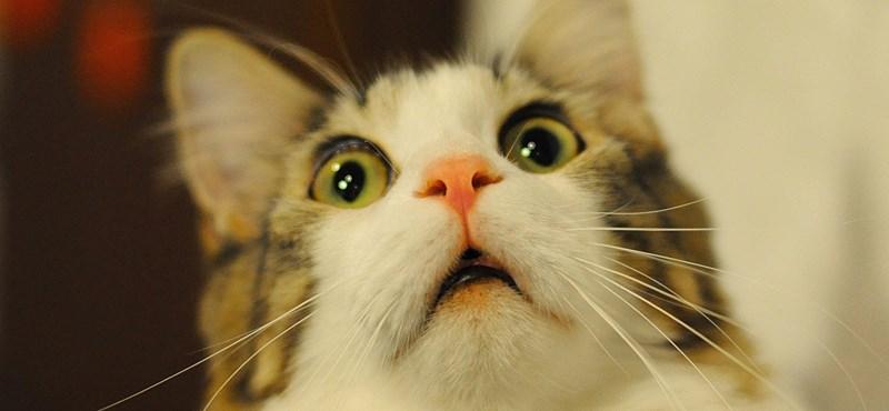 Felcsúton már azt is szabályozzák, hány macska lehet a háznál