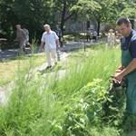 Térhatárolás: élő sövénytől a kerítésig