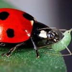 Áradás után szúnyoginvázió: hogyan védekezzünk ellene?
