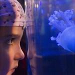 Medúzacsípésbe halt bele egy 7 éves olasz kislány