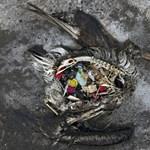 Az EU 2021-től nekimegy a műanyagoknak, a léggömbpálcika is tiltólistára kerül