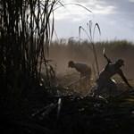 Titokzatos betegség Közép-Amerikában - 24 ezer halott tíz év alatt