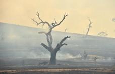 Előre tudhatták az ausztrál hatóságok, hogy bozóttüzek jönnek