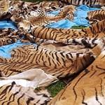 Új módszert vetnek be Afrikában az orvvadászok ellen