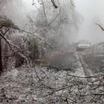 Félig megölte az ónos eső a Magas-Börzsöny erdeit