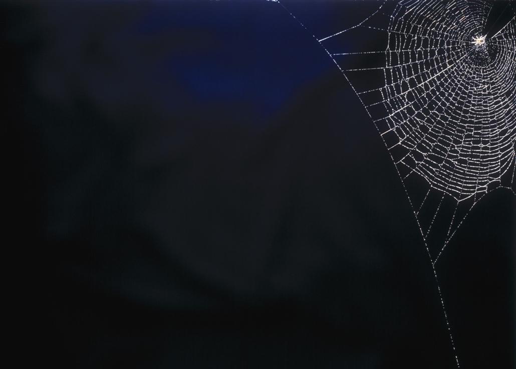 afp. pók, pókháló, nagyítás - 2011.12.16. Spiders web in the morning sun
