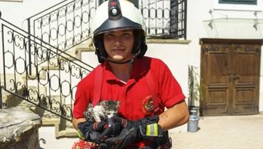 Tűzoltók húzták ki a kismacskát a plébánia kútjából
