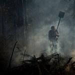 Turisták fékezték meg az újabb bozóttüzet Borsodban - Nagyítás-fotógaléria