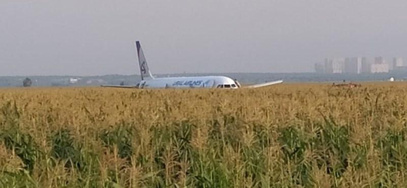 Madarakkal ütközött egy orosz repülő, kukoricaföldön tette le a gépet a pilóta – videó