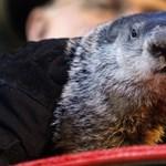 A mormota ellentmondott a budapesti medvéknek