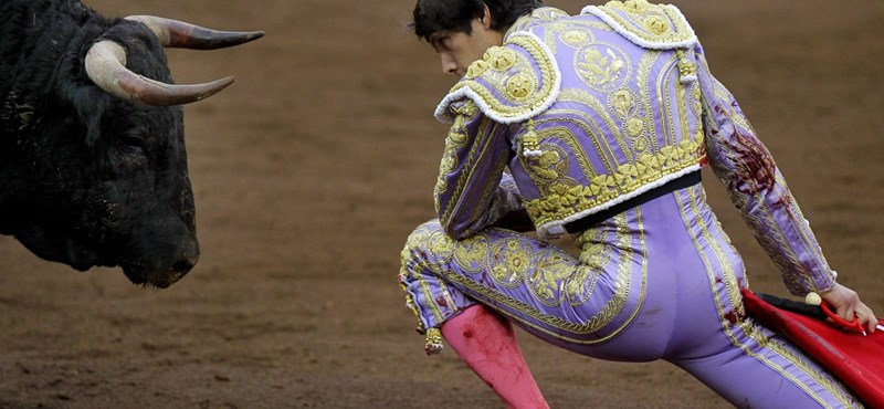 30 ezer bikát ölnek le évente, de szerintük ez művészet