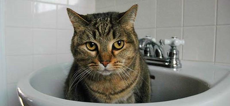 Most kiderül, hogy mit minek látnak a macskák a lakásban