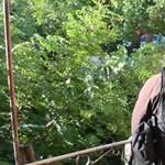 Anyjával közösen futtatta élettársát egy férfi Gyulán