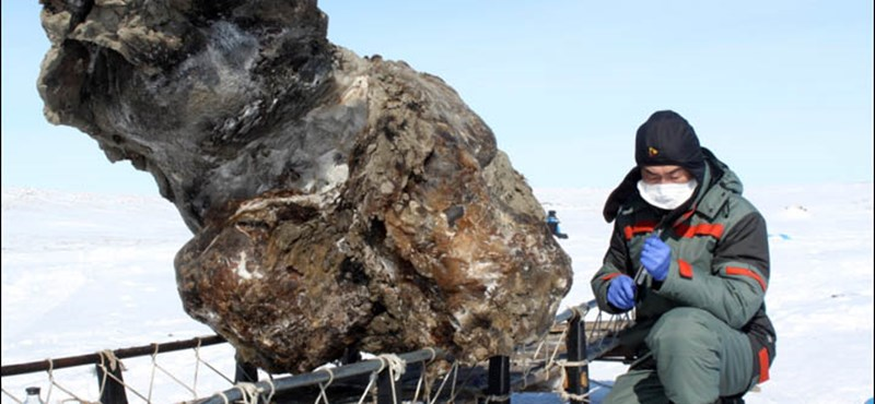 Tízezer éve halott mamut vérét találták meg Szibériában