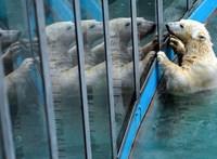 Annyian mentek a budapesti Állatkertbe, hogy megemelték a napi látogatószámot