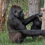 Az állatkertek ideje végleg lejárt?