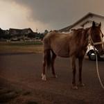 Hatalmas tűzvész tombol Arizonában – Nagyítás-fotógaléria