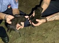 Gyorsan bíróság elé állítják a nőt, aki három kismacskát ásott el élve