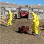 Bubópestis ütötte fel a fejét a mongol-orosz határon