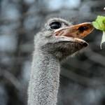 Lelőttek két emut Gyarmaton