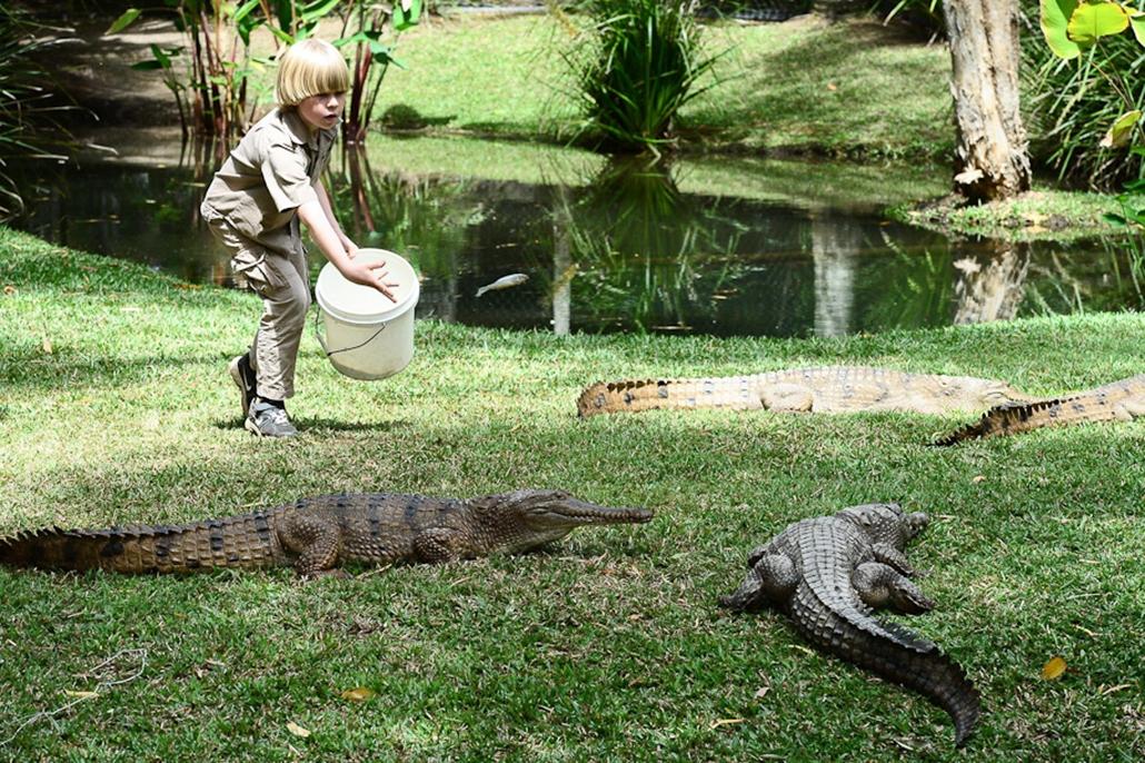 Krokodil, kisgyerek, idomár, hét képei