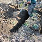 Kiderült, hogyan került az elásott női holttest az öreglaki kertbe