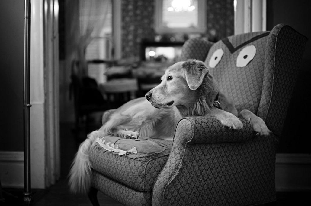 NE használd, nagyításhoz kértük!!! - kutyák altatás előtt - casey-05b
