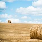 Alaposan ráfáztak a spekulációra a gazdák