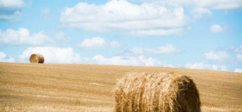Elveszik a nagybirtokosoktól az agrártámogatást