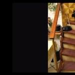 Egy becsavarodott cica története (videó)