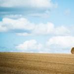 2500 kutató egybehangzóan állítja: az intenzív mezőgazdálkodás elpusztítja a természetet