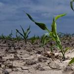 Katasztrofális következményei lehetnek az új vízgazdálkodási törvényjavaslatnak a WWF szerint
