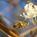 Miért van az, hogy a méheket csípjük, a darazsakat meg nem?