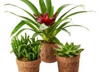 Komposztálható cserepekben árulja dísznövényeit a Spar