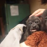 Costa Rica majomárvaháza (videó)