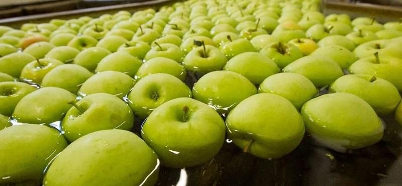 Almaautomata: kóla helyett gyümölcslevet ihatnak az irodisták