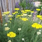 Mihez kezdjünk a kertünkkel a megbolondult időjárásban?