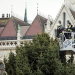 Veszprémből érkezett a Parlament elé az ország karácsonyfája – fotók