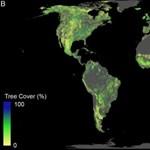 Megnézték a tudósok, hova lehetne még fákat ültetni, és nagyon megörültek az eredménynek