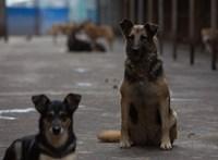 Rendőrök kellett megvédjék a balotaszállási kutyakínzót a bosszúállóktól